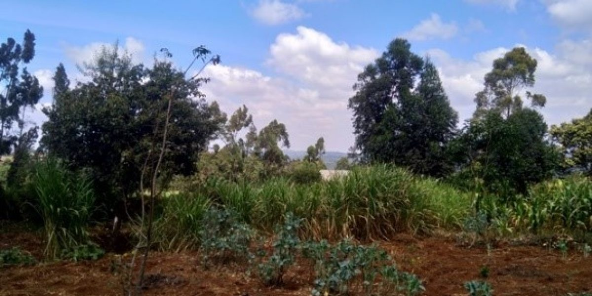 Plot for sale in Rironi, Limuru area
